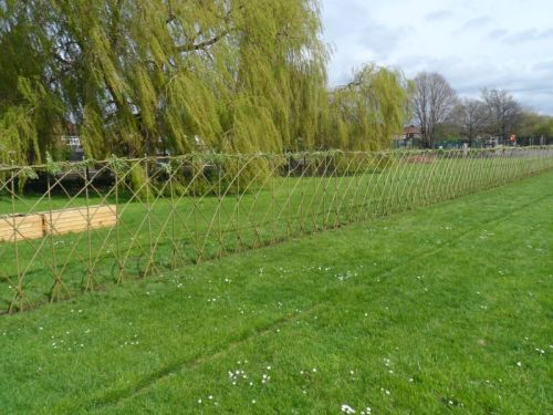 Living willow Fencing