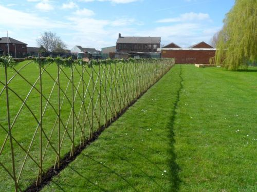 willow fence 1